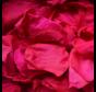 Rosenblüten Longlife Rosa 25GR