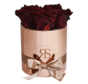 Flowerbox Longlife Zara Schoko