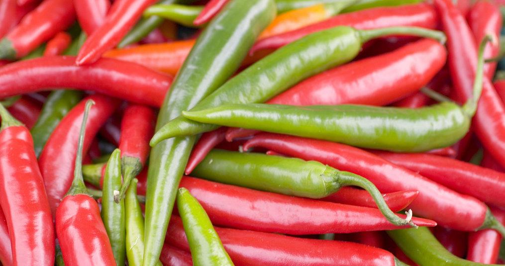 Anbau rote Chilis