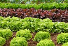 Lebensmittel selber anbauen