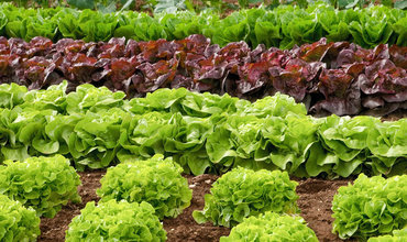 Lebensmittel zuhause selber anbauen: So geht's!