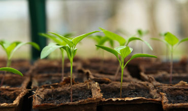 Beginnen Sie in 5 Schritten mit dem Anbauen