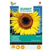 Buzzy Riesensonnenblume Giganteus Samen
