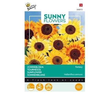 Buzzy Sonnenblume Fantasie Samen