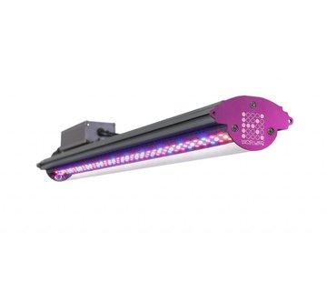 Kind Led LED Growlampe Kind Led X80 LED Stab