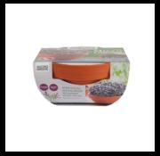 Buzzy Grow Gifts Microgreens Terrakotta Blumentopf Roter Mizuna