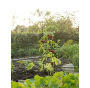 Nature Tomaten-Stützdreieck 3xH150cm x Ø11mm