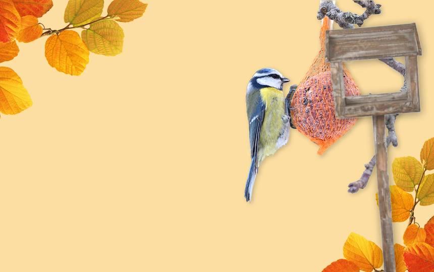<br>Hilf den Vögeln