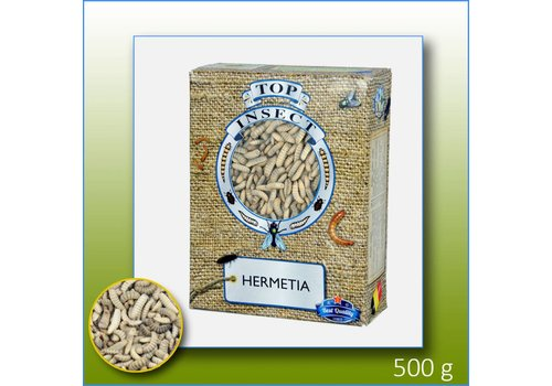 Top Insect Top insect Hermatia