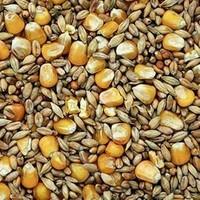 Garvo | Gemengd graan met zonnepit |  20 KG