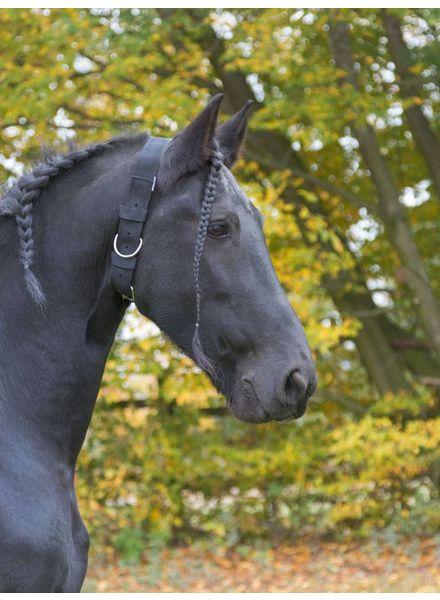 Halsriemen f. Pferde 5cm br.
