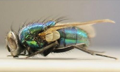 Chemische Insekten bekämpfung