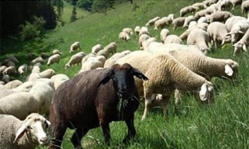 Schafnetze & Zubehör