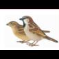 vogel dakvoet. Vogelvriendelijke dakvoetafwerking