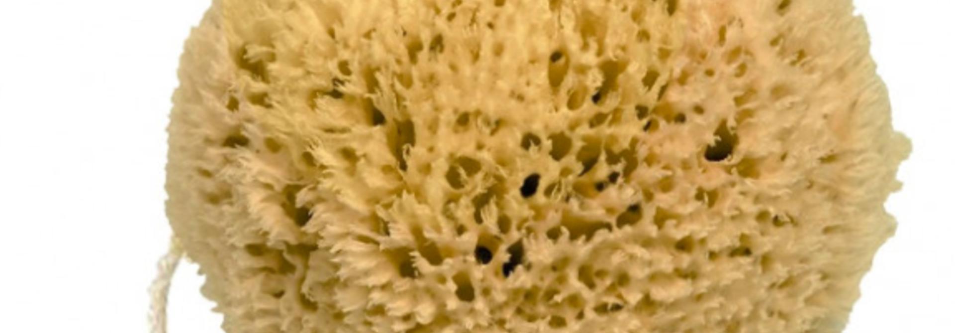 Natuurlijke spons met koord
