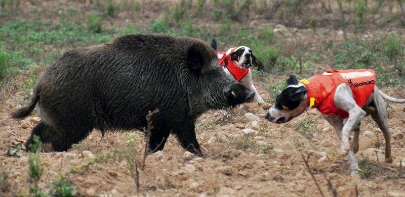 Browning Hundeschutzweste Protect Hunter