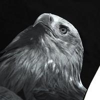 Beşiktaş Arend Poster T-Shirt Kinderen 6818151