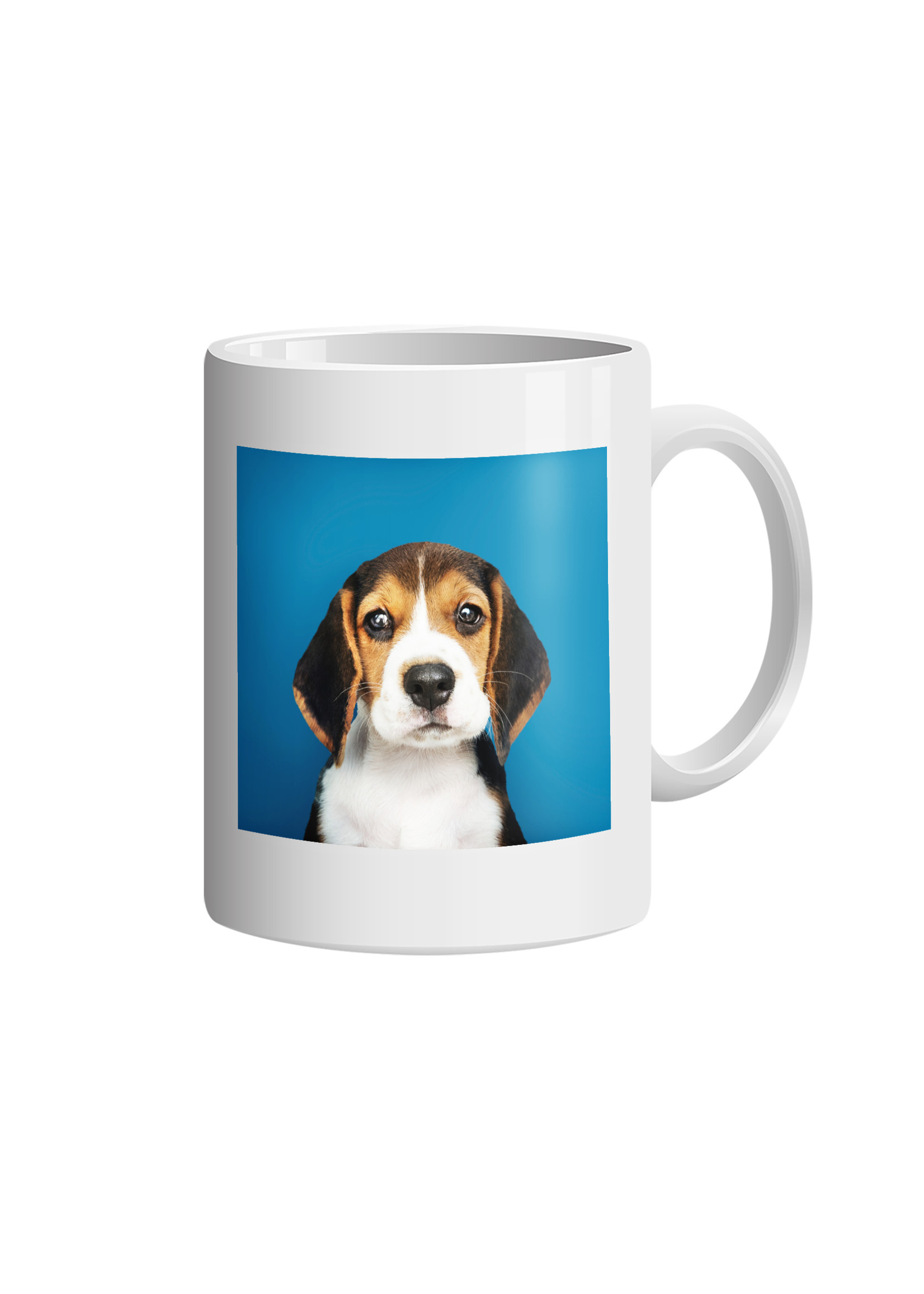 Mok beagle puppy