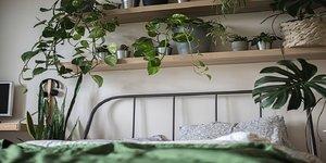 Trend: een jungle slaapkamer