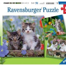 Ravensburger Ravensburger puzzel Jonge katjes (3x 49 stukjes)