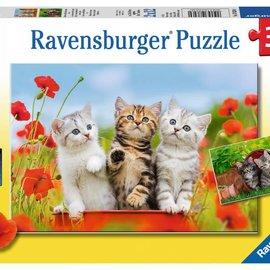 Ravensburger Ravensburger puzzel Katjes op ontdekkingsreis (2x 12 stukjes)