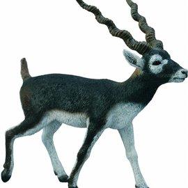 Collecta Collecta Antilope Zwarte Bok