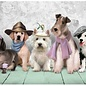 Art puzzle Dogs (500 stukjes)