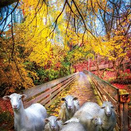 Sunsout SunsOut puzzel Sheep Crossing (550 stukjes)