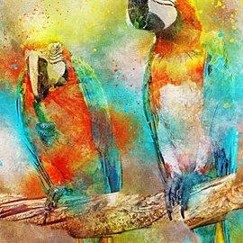 Bluebird Bluebird puzzel - Parrots (1000 stukjes)