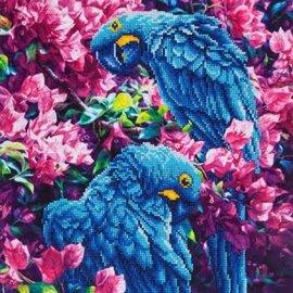 Diamond Dotz Diamond Dotz Blauwe papegaaien 52 x 42 cm