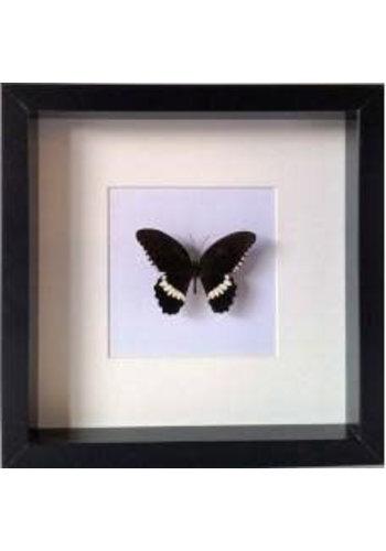 Les Soeurs Frame Butterfly