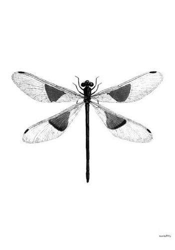 Vanillafly Frame 20x25cm