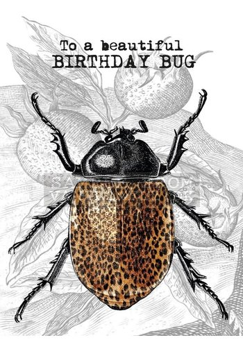 Vanillafly A5 Greeting Card Birthday Bug