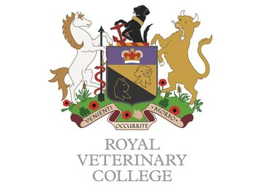 RVC Mens Rugby Team