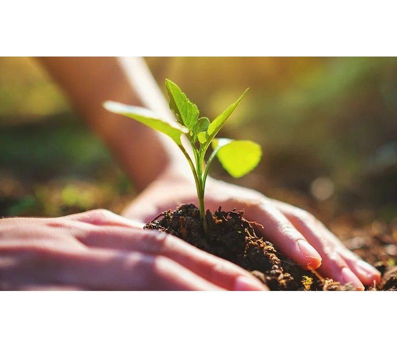 edenprojects.org 10 Bomen Planten en CO2 compenseren