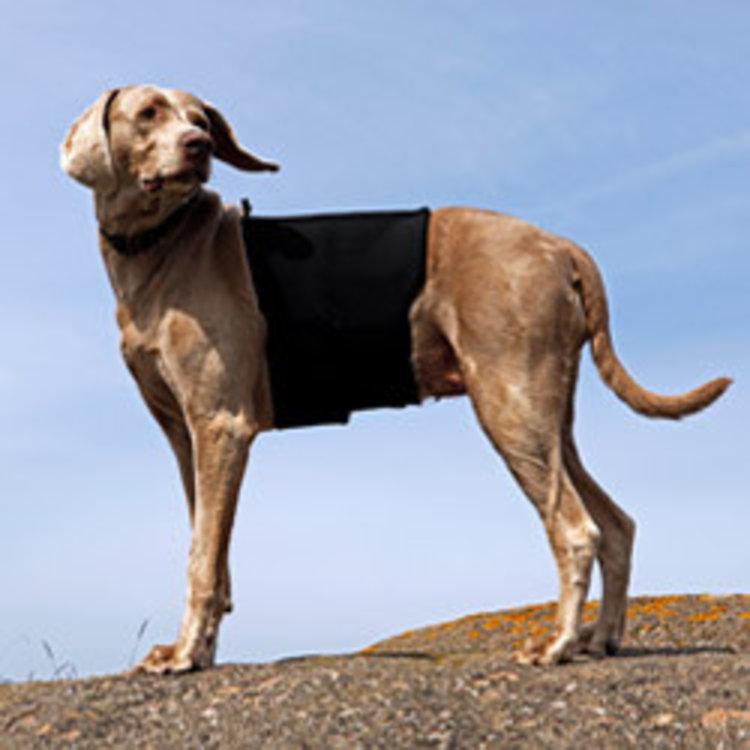 Back on Track Back on Track Hondenrugbeschermer