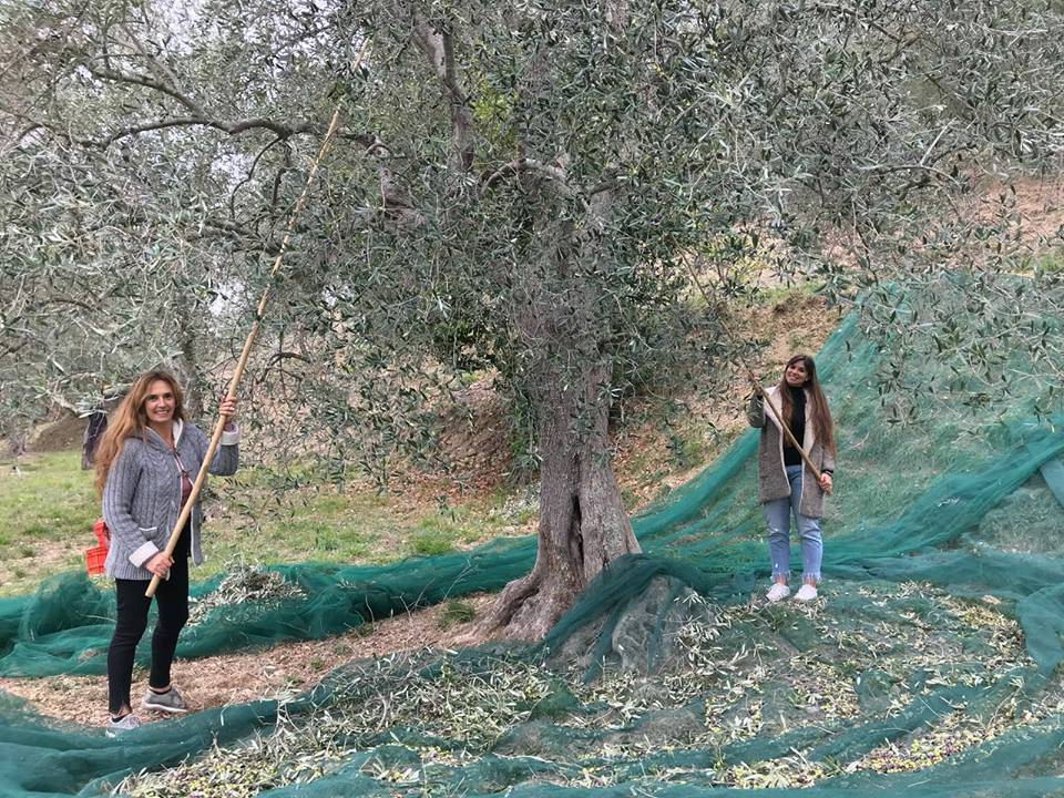 Sommariva Huile olive extra vierge Cru Muela - 500ML