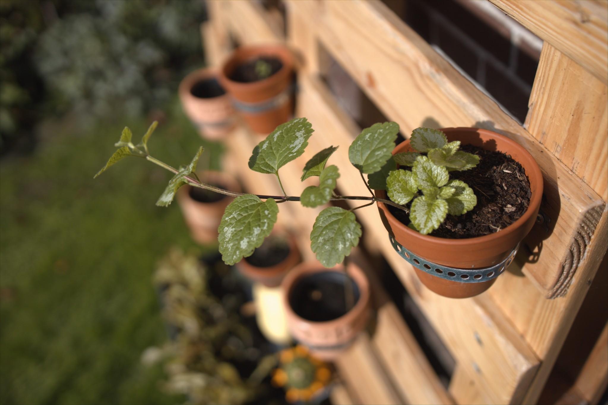 ideeen-balkon-moes-tuin