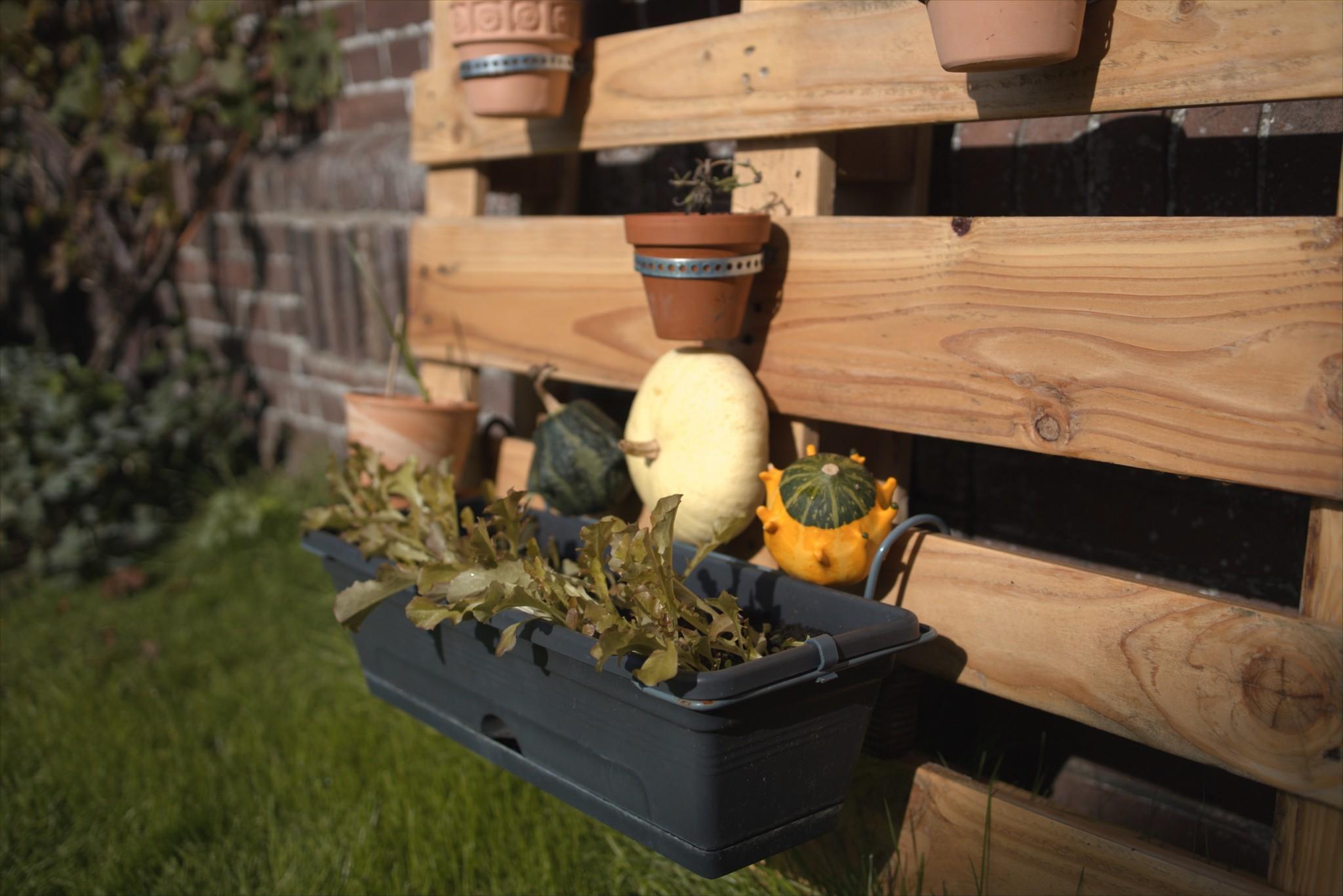 verticale-moes-tuin-herfst