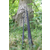 Ashima Ashima - FFX-S Carp rods | Compact carp rod with retractable part