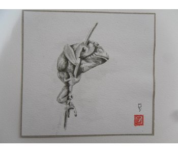 Tallo de caña rana Shikishi 13x12 cm