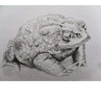 Toad 1 Shikishi 13x12 cm