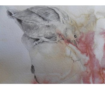 Pera d'uccello 1 Shikishi 13x12 cm