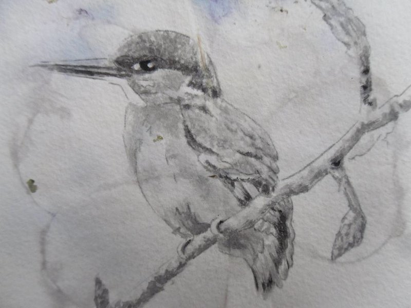 Kingfisher 6 Shikishi 13x12 cm - Kopiëren