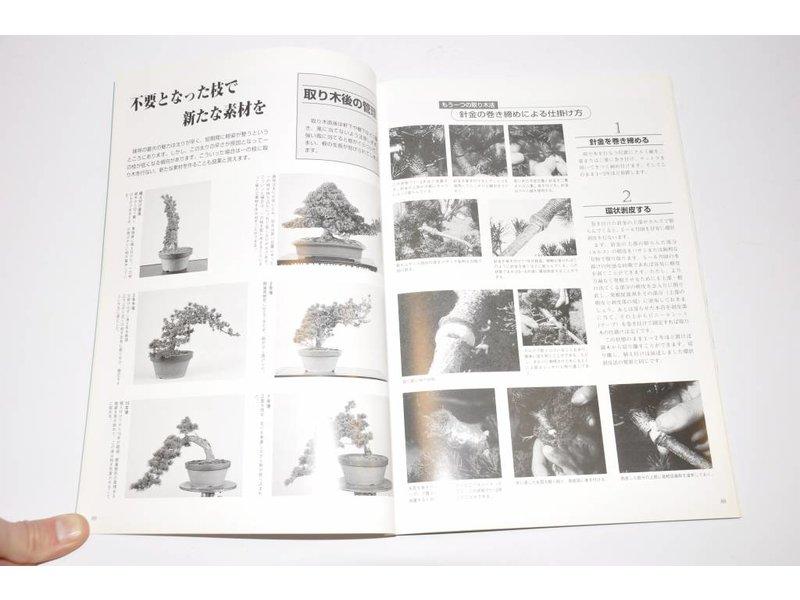 Livre De Pin Blanc Japonais Bonsaiplaza