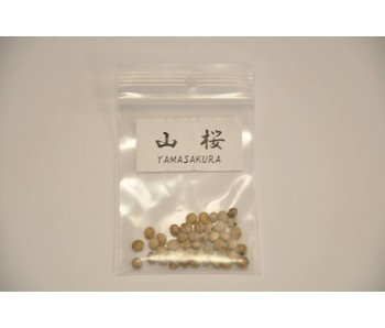 Yamasakura, Prunus Sargentii
