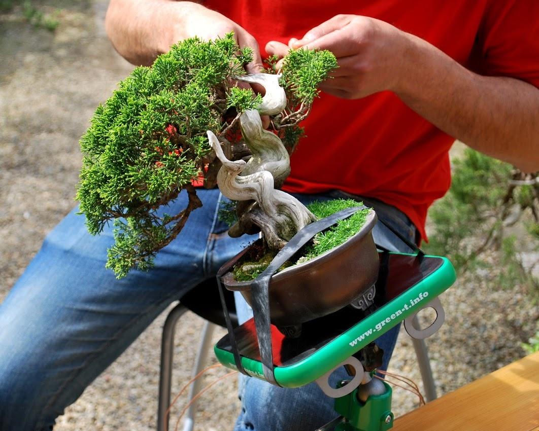 New Green T Mini V Shohin Bonsai Work Table Model V Bonsaiplaza