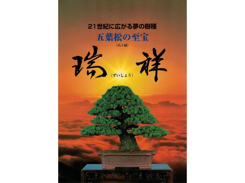 Handboek Japanse witte dennen - Goyomatsu Zuisho