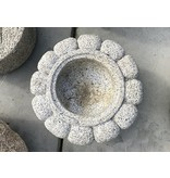 Japanse Tsukubai Lotus 20 cm