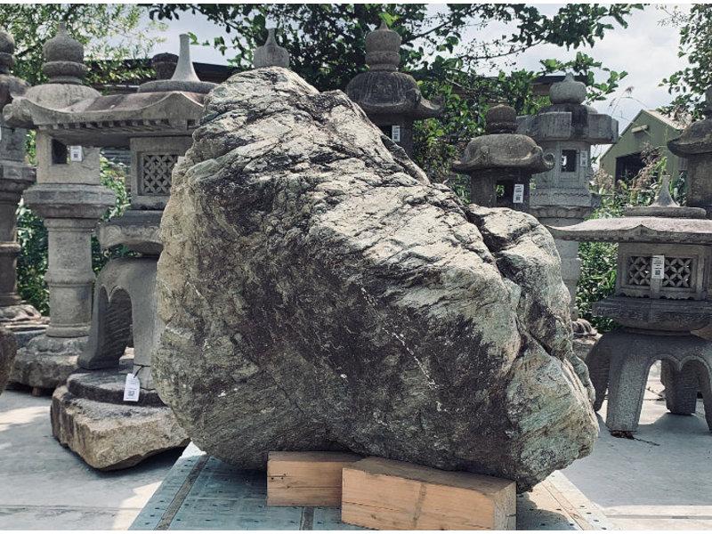 Japanse Sierrots Nagoya 90 cm